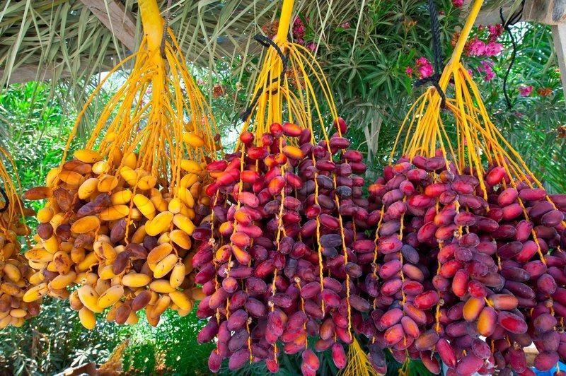 multi-colored-dates-in-the-israeli-market